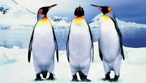 Pingvini, pozdravljeni.